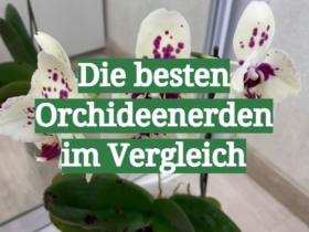 Die besten Orchideenerden im Vergleich