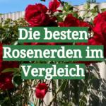 Die besten Rosenerden im Vergleich