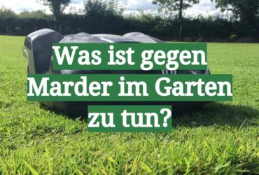 Was ist gegen Marder im Garten zu tun?