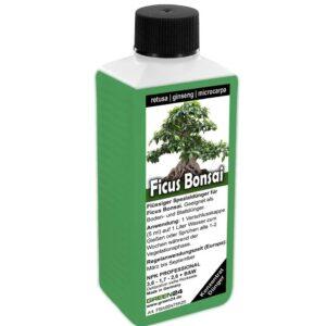 GREEN24 Ficus